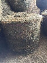 Lucerne hay round bales for sale Singleton Singleton Area Preview