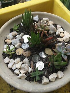 Succulent plants start $10 to $20.