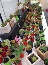 Plants plants plants, lots of cheap plants. Message me for an app Woolgoolga Coffs Harbour Area Preview