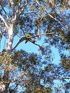 Landscape maintenance /Arborist Pennant Hills Hornsby Area Preview