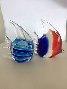 2 Glass Fishes Queanbeyan Queanbeyan Area Preview