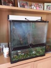 For Sale: 2 Green Tree Frogs and Terrarium ONO Mornington Mornington Peninsula Preview