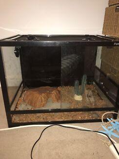 REPTILE ONE enclosure / terrarium