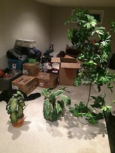 Three fake plants/tree