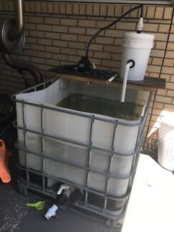 IBC used as grow out tank for fish