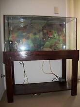 Large Fish Tank with Custom made Timber Stand Miranda Sutherland Area Preview