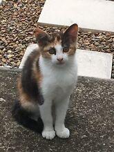 Free Kitten Granville Parramatta Area Preview