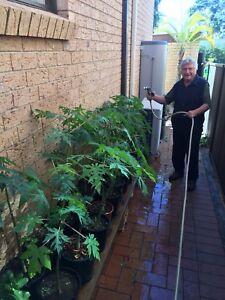 Mother S Day Plant Garden Indoor Outdoor Plants
