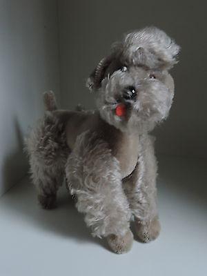 Steiff, Hund,Pudel,Snobby,grau,ohne K/F/S,60er Jahre