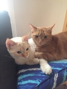 Two cats to rehome