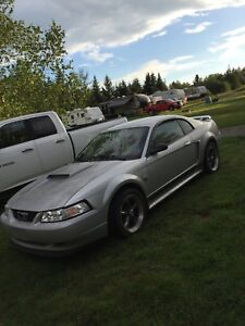 2004 Mustang 40th Anniversary Edition
