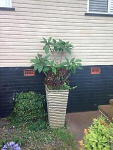 assortment  of large glazed pots and plants Toowoomba Toowoomba City Preview