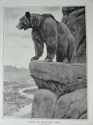 """Philip R. Goodwin Print, Grizzly Bear 1903, 11"""" x 16"""", Stunning Image"""
