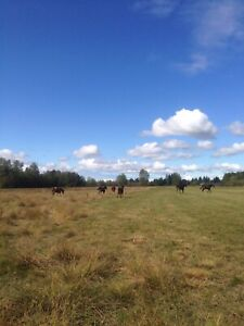 ISO long term pasture. Vernon & surrounding areas.