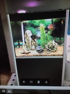 60 Gallon Aquarium