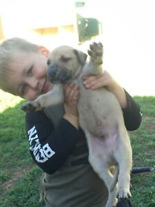 Puppies forsale