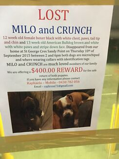 STOLEN PUPPIES - BULLDOG AND BOXER Moorebank Liverpool Area Preview