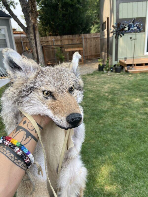Coyote Headdress Native American Beadwork Mountain Man coonskin hat rendezvous