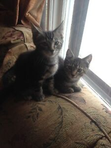 Two free cute kitties