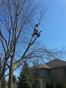 Tree removal and trimming service!