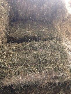Grassy lucerne hay 4 sale