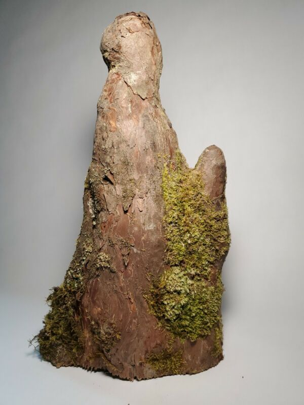Louisiana Natural Cypress Tree Knee with Bark for Crafting