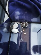 Baby mice for sale Ipswich Ipswich Ipswich City Preview