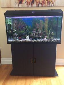 Aquarium tout équipé