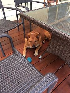 HOUSE/PET SITTER FINGAL HEAD AREA Fingal Head Tweed Heads Area Preview