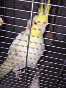 Oiseau et cage