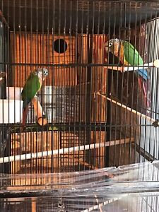 2 PRETTY SMALL PARROTS WITH BIRD CAGE 4 SALE !!