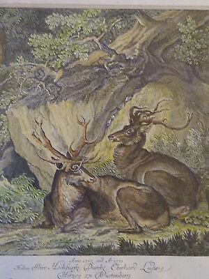 Kupferstich alt colloriert Stich von Johan E. Ridinger (1698-1764) Hirsch