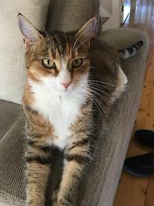 LOST CAT - COBURG AREA Coburg Moreland Area Preview