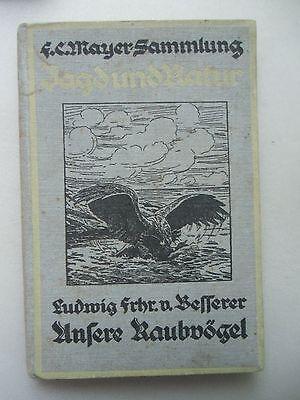 Unsere Raubvögel mit bes. Berücksichtigung Flugbilder 1926 Ornithologie Vögel