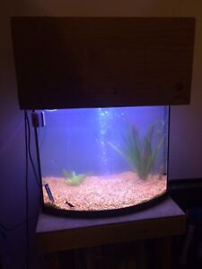 30 gallon bow front ready to go