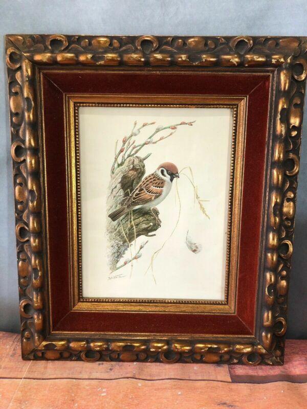Eurasian Tree Sparrow Bird Print Framed Under Glass Art Signed R. Schotz