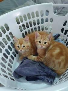 Kittens giveaway
