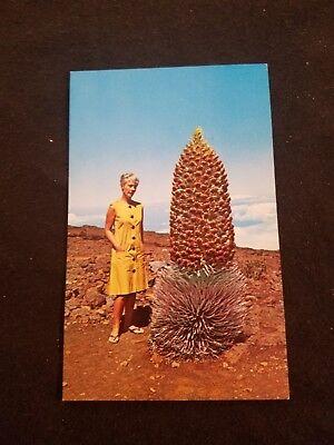 Haleakala National Park Maui Hawaii The Silversword - Old Postcard 85954