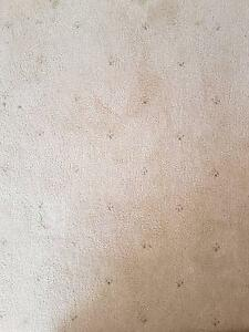 Carpet and Underlay 9 x 5m Urgent Must Go Sunbury Hume Area Preview
