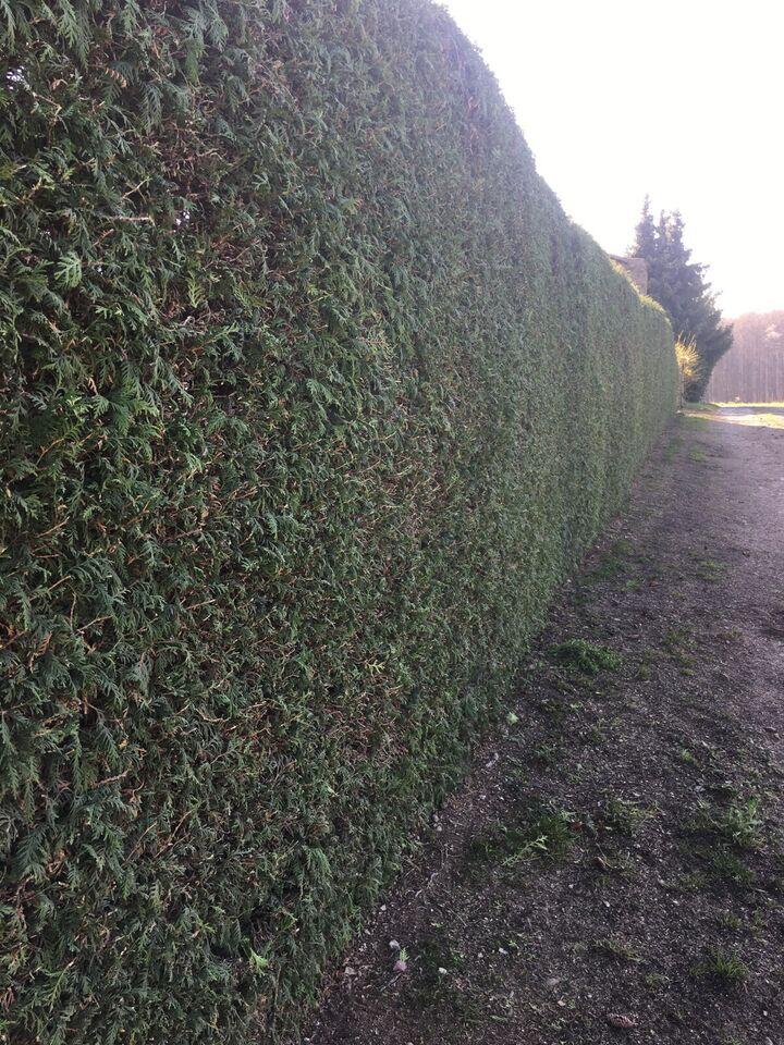 Gartenarbeiten Baumfällungen in Northeim