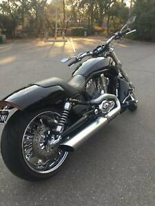 Harley Davidson 2009 V Rod Muscle one of a kind and immaculate