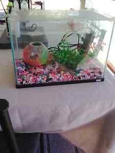 Small glass fish tanks & ornaments Singleton Singleton Area Preview