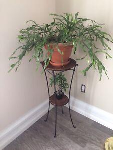 Ensemble étagère et plantes