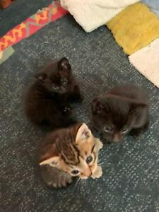 KITTENS NEEDING GOOD HOMES