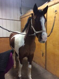 Wonderful Horse for part board