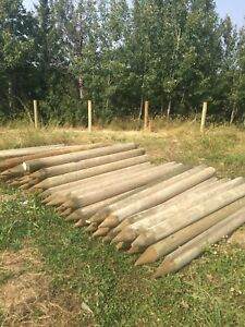 Fence posts wood 7 ft x 5 1/4 inch doweled posts