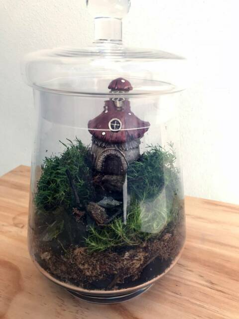 Gnomesville Planted Terrarium Other Home Decor Gumtree Australia