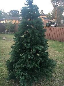 Large Xmas tree! Cranebrook Penrith Area Preview