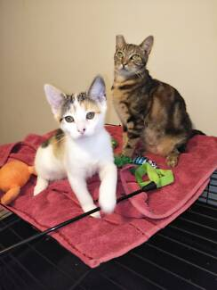 RESCUE KITTENS BECKY & BUNNY LOOKING FOR A FOREVER LOVING HOME
