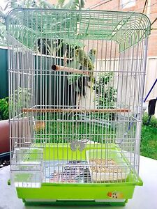 Green And Aqua Budgies Male Female Pair With Cage Auburn Auburn Area Preview